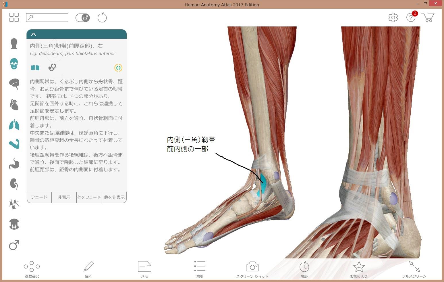 腓 前 靭帯 脛
