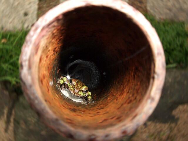 井の中の蛙‼ | Takao's Ownd
