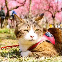 猫同伴可の施設 ページ2 旅にゃんこ だいきち ふくちゃん The Traveling Cats
