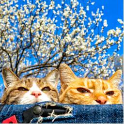 猫と気球 旅にゃんこ だいきち ふくちゃん The Traveling Cats