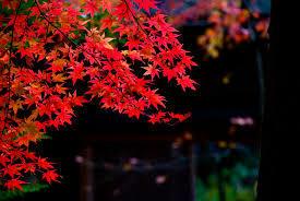 秋になったら秋服。秋髪。洋服を着替えるように髪も着替える。
