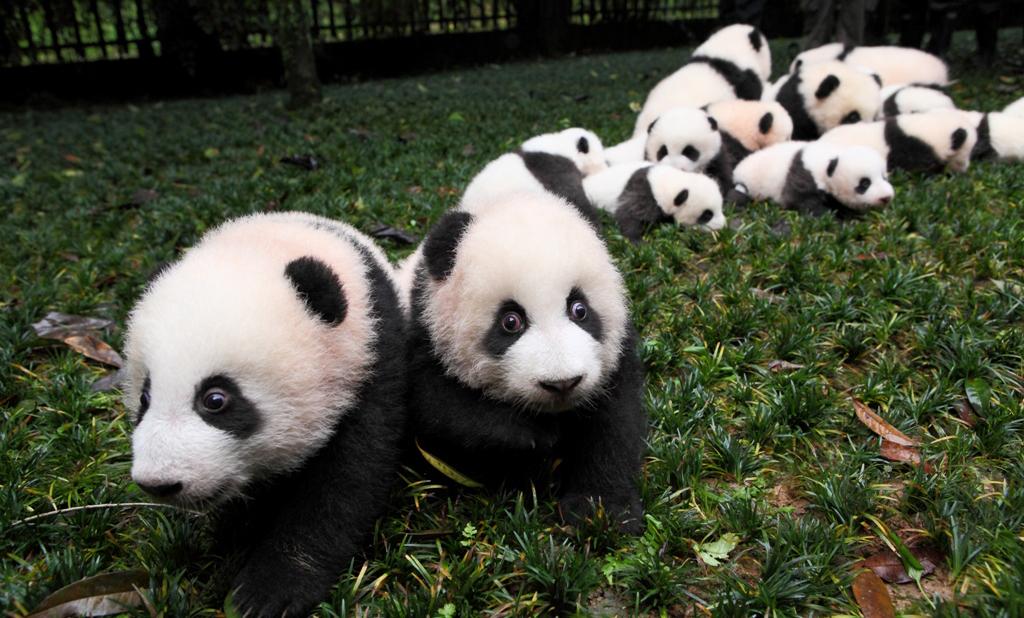 日本パンダ保護協会について | 日本パンダ保護協会