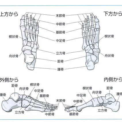 骨 内側 楔状