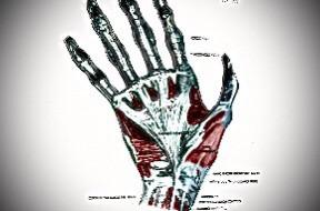 指に筋肉は、