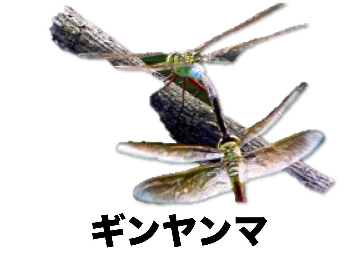 ギンヤンマ ギンヤンマの生態や捕まえるコツ