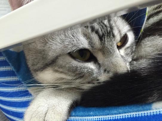 カフェ 八戸 猫