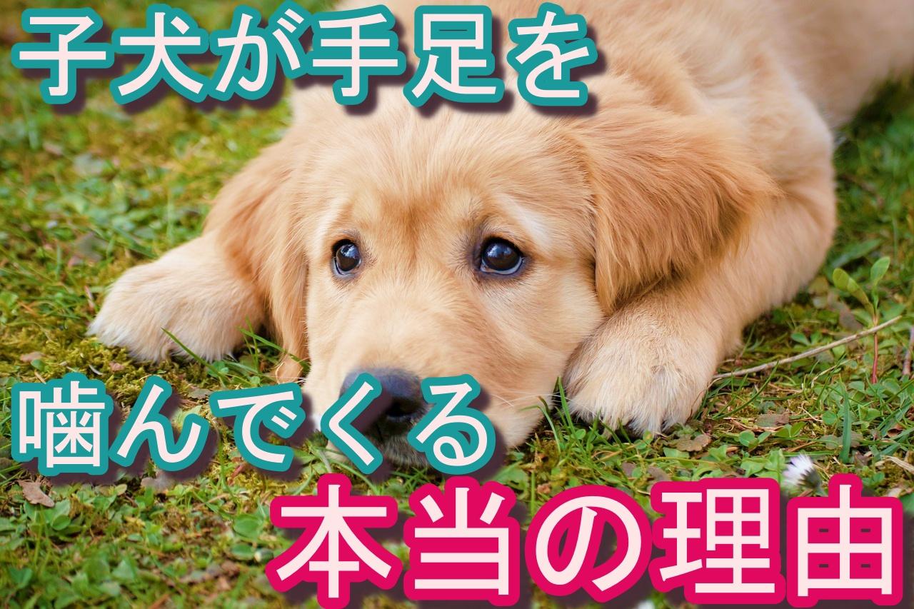噛む 痛い 子犬