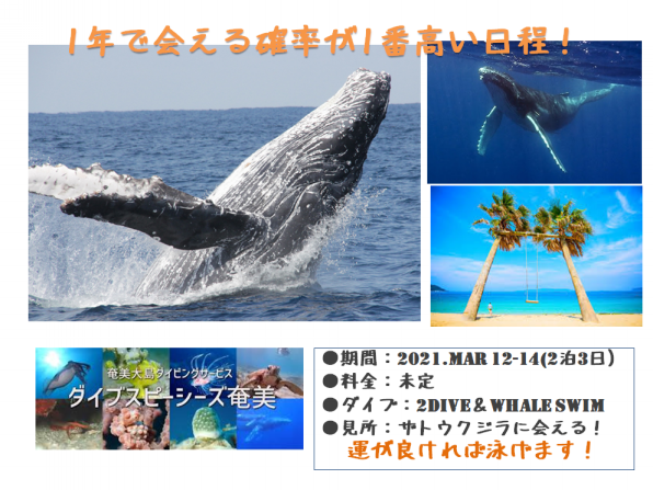 クジラと泳ごう!   EARTH SOUND 東京都練馬区ダイビングショップ ...