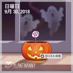 Plant Nanny Ka Wa I I Blog