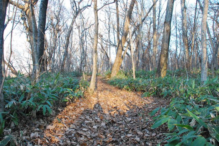 森の一本道