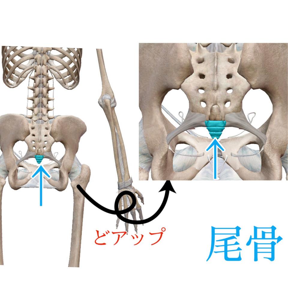 どこ 尾骨