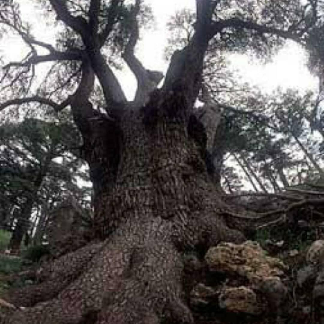 環境問題 エコロジー森林破壊