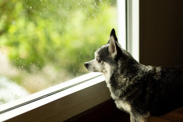 梅雨を快適に過ごす BLOG