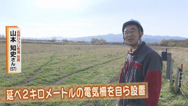 石狩 ひつじ 牧場