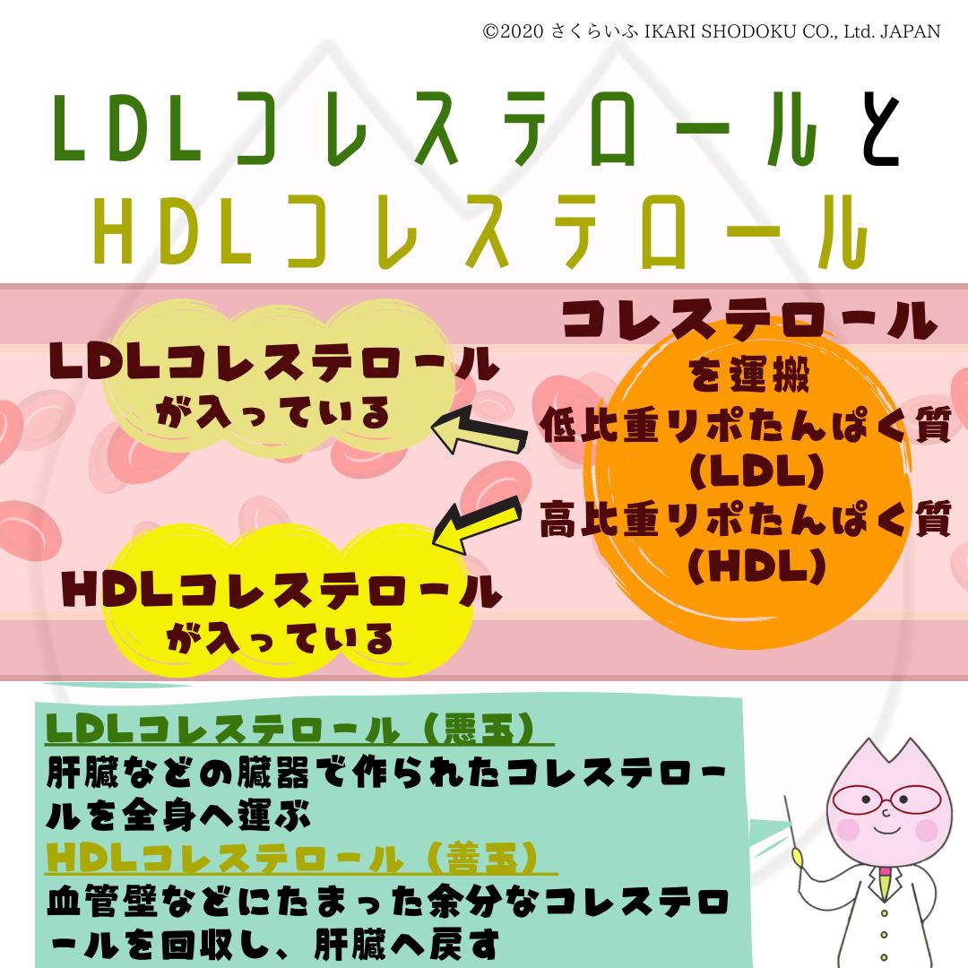 は と hdl コレステロール